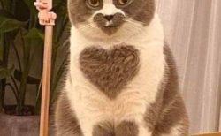 【幸運】ハートマークが3つもある「奇跡の猫」が発見される!
