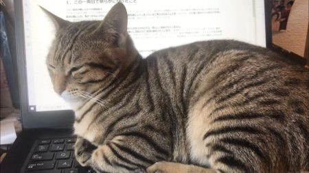 【自宅仕事】テレワーク最大の課題「猫」が立ちはだかる!