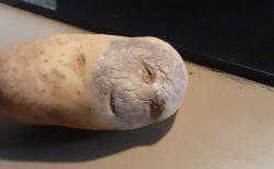 【ニッコリ】めちゃくちゃ幸せそうな「顔」をしたジャガイモが話題に!