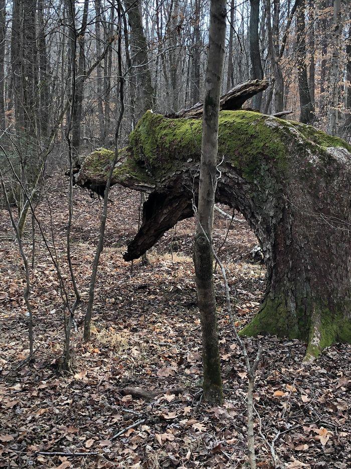 【大自然】封印されし森のドラゴンにしか見えない「木」が発見される!