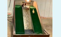 【動画】水滑り台に夢中なアヒルさんたちが可愛すぎる「エンドレス 笑」「楽しそう」