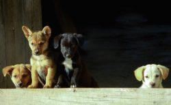 【よちよち】滑ることの楽しさを知ってしまった子犬集団がものすごくかわいい!