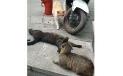 【動画】ねこ3匹のやばそうな現場を激写!