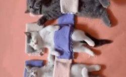 【zzzz】ねこちゃん並んでお休み中~寝てるポーズがかわいい