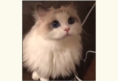 【動画】美人すぎるネコさんにネット騒然