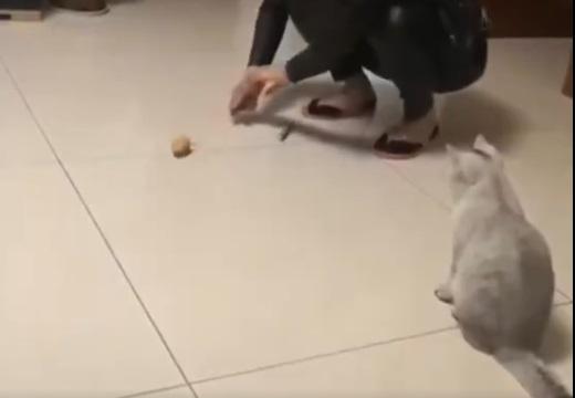 【笑】ねずみのおもちゃを初めて見たねこさんの反応!なぜジャンプ?!