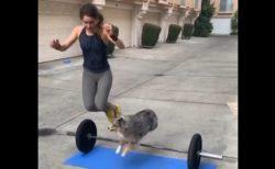 【楽しそう】犬といっしょにトレーニング!最後のハイタッチがたまらない