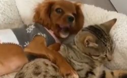 【動画】なかよしの犬と猫、見てるだけで和むと話題
