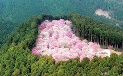 【リアル桃源郷】奈良にある桜の名所「高見の郷」がすごいと話題。これは行ってみたい!