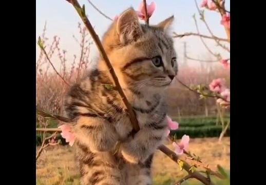 【動画】木によじ登ってお花見してる猫ちゃん。見てるだけでほのぼのしちゃう