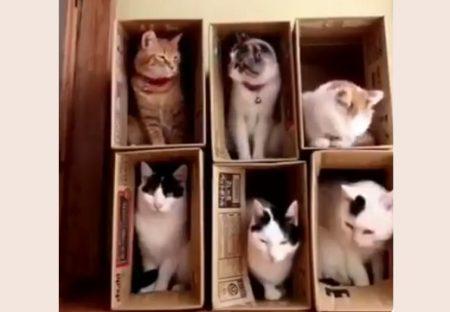 【動画】猫マンションの様子がおもしろいと話題。猫の世界にもいろいろある模様