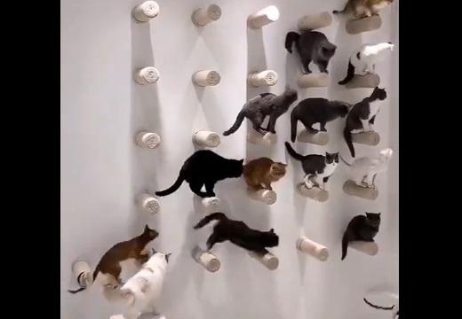 【動画】「おいで~集合~!」一斉に壁に集合する猫ちゃんたちがカワイイ!