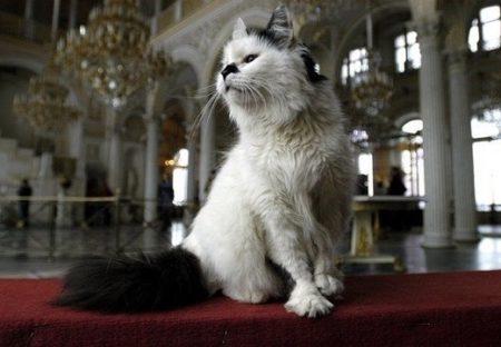 【エルミタージュの猫】ロシアの美術館に常駐する猫の警備隊50匹が話題。会いに行ってみたい!