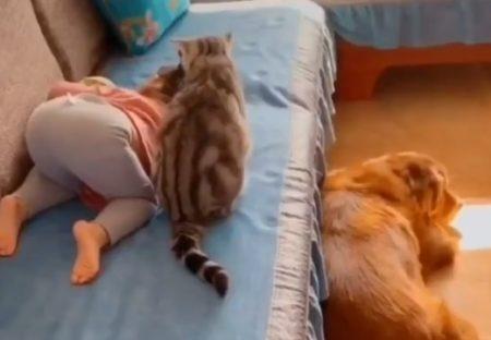 【動画】子供のそばでずっと安全確保しているねこさんが話題