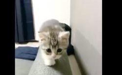 """ソファーに登れたのが """"嬉しすぎる"""" 猫ちゃんをご覧ください。"""