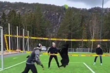 【天才】人間に混ざって「バレーボール」をする犬。ちょっと凄すぎない?