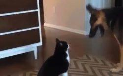 【平和】争いより「大切なこと」に気がついた猫ちゃん!