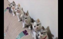 息ピッタリ!完全にシンクロした子猫ちゃんの動きが可愛すぎる!