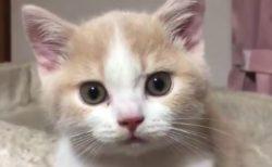 【美人】可愛い声で話しかけてくる猫ちゃんが最高に可愛い!