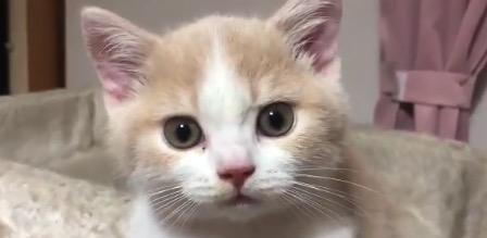 猫 画像 かわいい