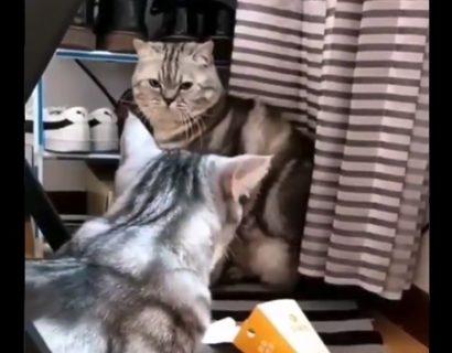 カーテンに擬態する猫ちゃん。ついに見つかってしまう!