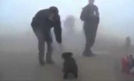 【救出】森林火災から助けてくれた「レスキュー隊員」から離れない小熊ちゃん!