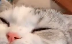目薬をさす猫ちゃん。我慢できて偉いね!