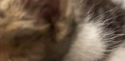 【猫】とにかく可愛いので「28秒間」だけ下さい!(動画あり)