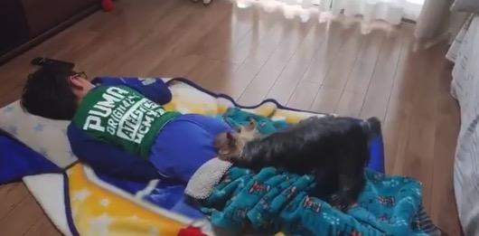 寝ている人間の「布団」で遊ぶワンコくん。楽しいのかそれ!