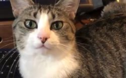 どうしても机の上からどきたくない猫。苦肉の策へ!