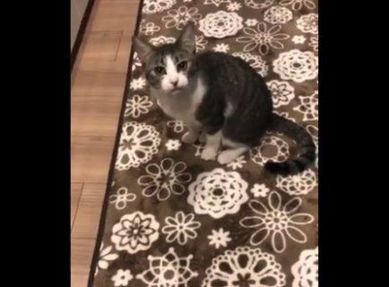 やたらとよく喋る猫ちゃんが発見される!