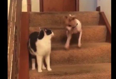理不尽な猫パンチにより、日頃の鬱憤が爆発したワンコ!