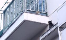 【ベランダ】猫界の「ロミオとジュリエット」を発見。切ない!