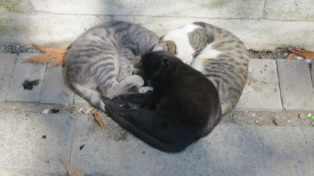 【アート】猫で構成された「ハートマーク」が素晴らしすぎる!