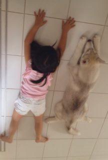 【仲良し】娘とハスキー犬「7年間」の成長率が同じだった!