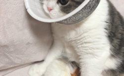 【猫の首】カラーの代わりに「どん兵衛」をつけたらピッタリ!