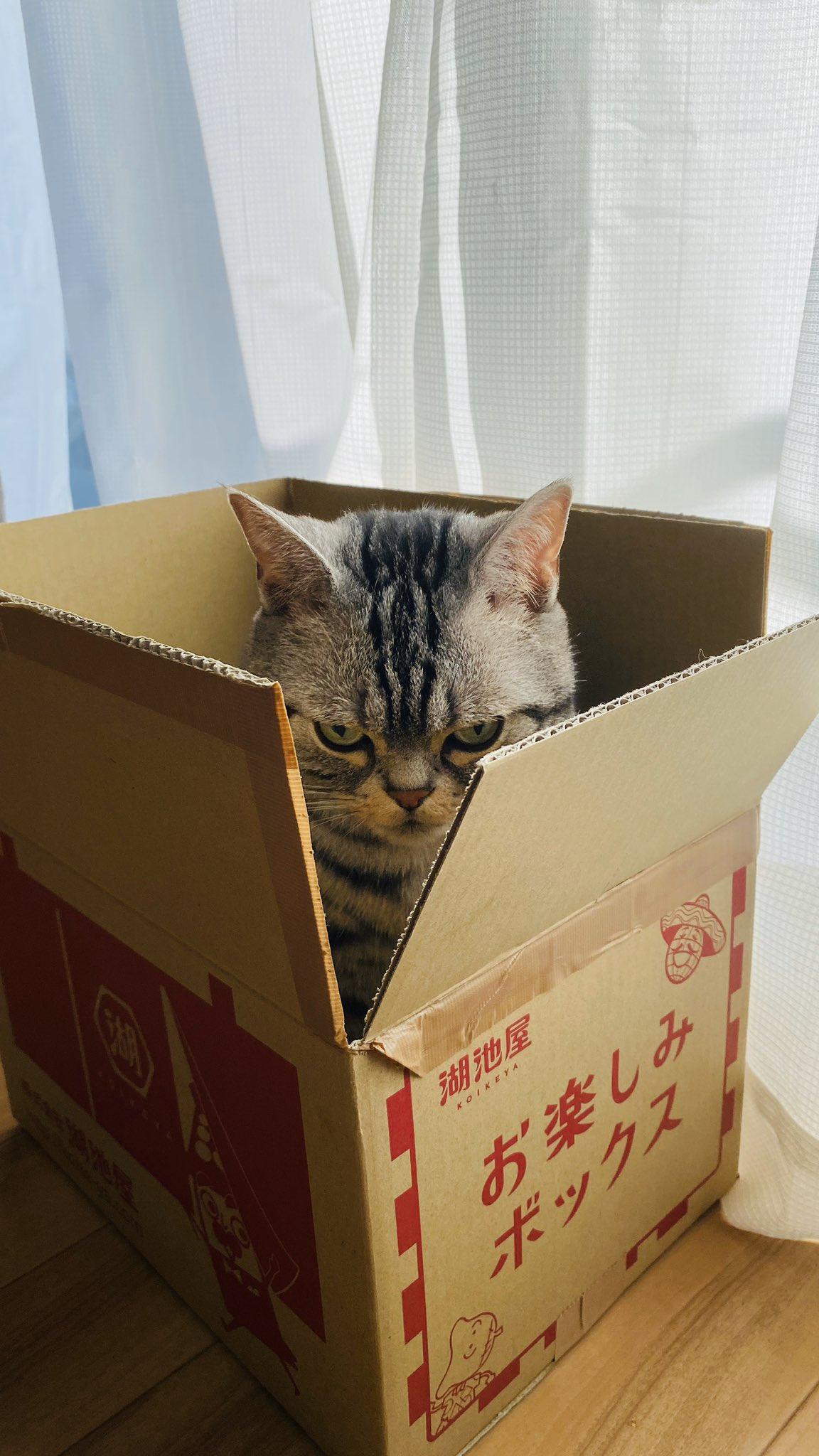 【猫ちゃん】めちゃくちゃ怖い顔をした「箱入り娘」を発見!