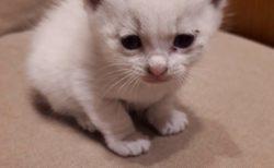 【ミラクル】壁に穴をあけたら子猫がたくさん!信じられない光景だ・・・