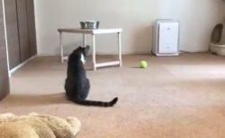 【パニック】猫さんが自分のしっぽの存在に気づいた瞬間の動画が話題