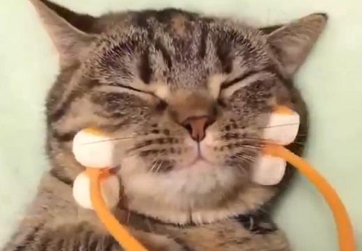 【ころころ】お顔マッサージをしてもらう猫ちゃん!すごく気持ちよさそう~