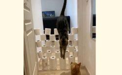 【動画】猫の運動神経、ヤバすぎると話題に「人間で例えるとビル3階くらいを助走なしで飛べるらしい」