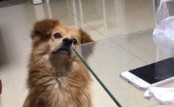【笑】「あれ?いまのお菓子はどこ?」考えこんじゃう犬が可愛すぎる
