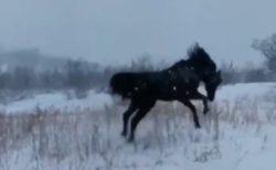 【動画】初めての雪が嬉しくてはしゃぐ馬が話題「犬みたい」「ギャップ萌え」