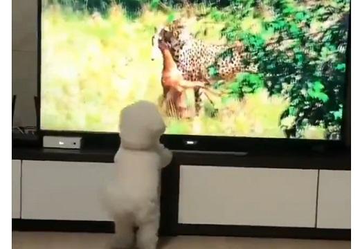 【笑】狩りをする先輩に憧れ真似をする犬が可愛すぎる!