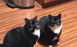 【笑】先月うちの猫がいなくなった。先週、見つけて連れて帰ってきた。今日、猫が帰ってきた・・・