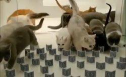 【動画】すり抜ける猫ちゃんたちシリーズが話題。すごすぎる能力だ
