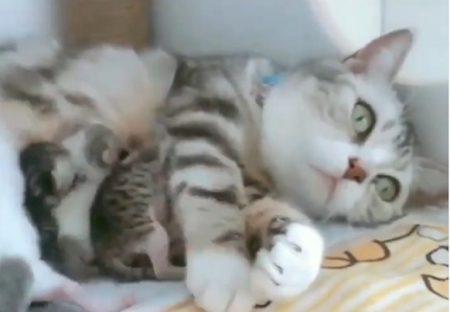 【愛】お母さん猫が子猫を守る動画が話題「母の愛ってすごい」「本能」