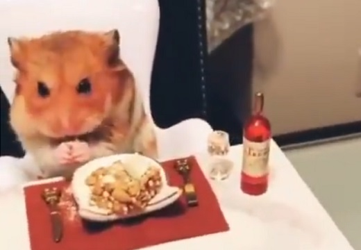【動画】豪華ディナーをお行儀よく食べるハムスターくんが話題。可愛すぎる!