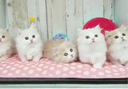 【動画】子猫ちゃん達の前でおもちゃをチラチラしてみたら・・みんな同じ動きして超可愛い!