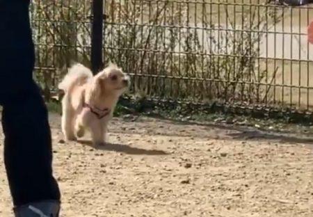 【きょろきょろ】ドッグランで迷子になっちゃった犬が可愛すぎる
